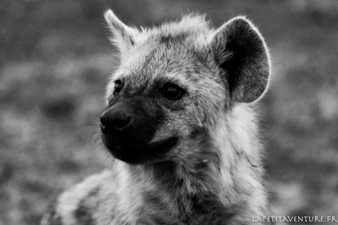 afrique-safari-animaux-blog-la-petite-aventure-1