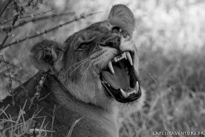 afrique-safari-animaux-blog-la-petite-aventure-11
