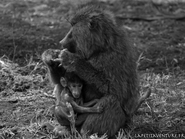 afrique-safari-animaux-blog-la-petite-aventure-13
