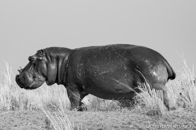 afrique-safari-animaux-blog-la-petite-aventure-14