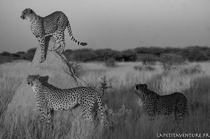 afrique-safari-animaux-blog-la-petite-aventure-15