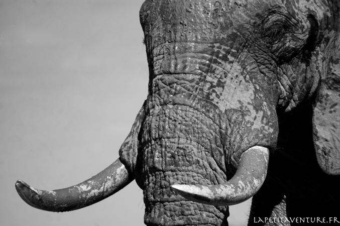 afrique-safari-animaux-blog-la-petite-aventure-16