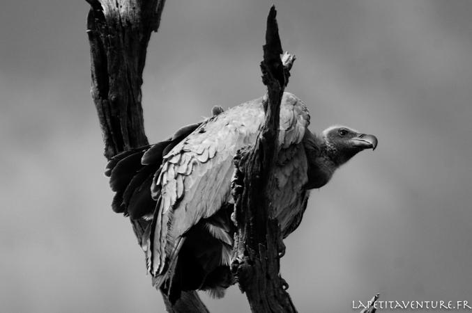 afrique-safari-animaux-blog-la-petite-aventure-17