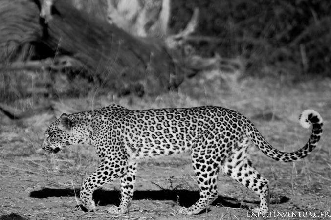 afrique-safari-animaux-blog-la-petite-aventure-18