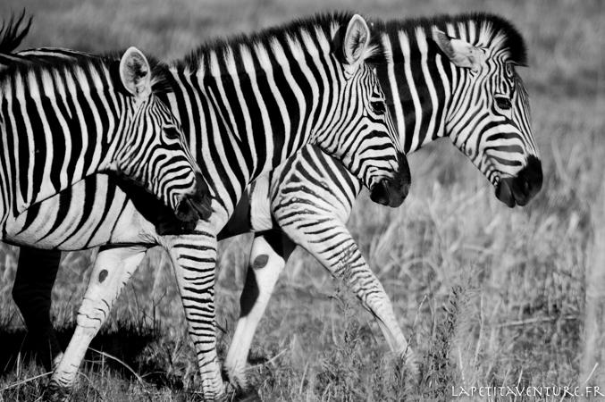 afrique-safari-animaux-blog-la-petite-aventure-2