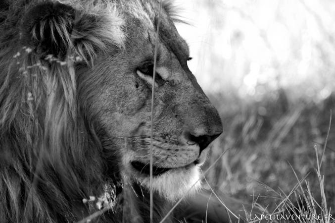 afrique-safari-animaux-blog-la-petite-aventure-23