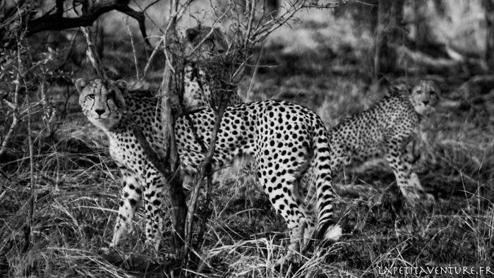 afrique-safari-animaux-blog-la-petite-aventure-24