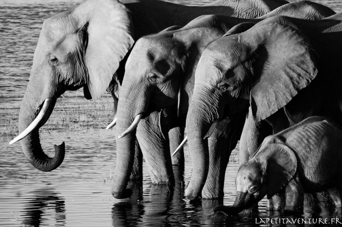 afrique-safari-animaux-blog-la-petite-aventure-25