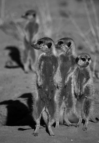 afrique-safari-animaux-blog-la-petite-aventure-26
