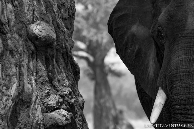 afrique-safari-animaux-blog-la-petite-aventure-5