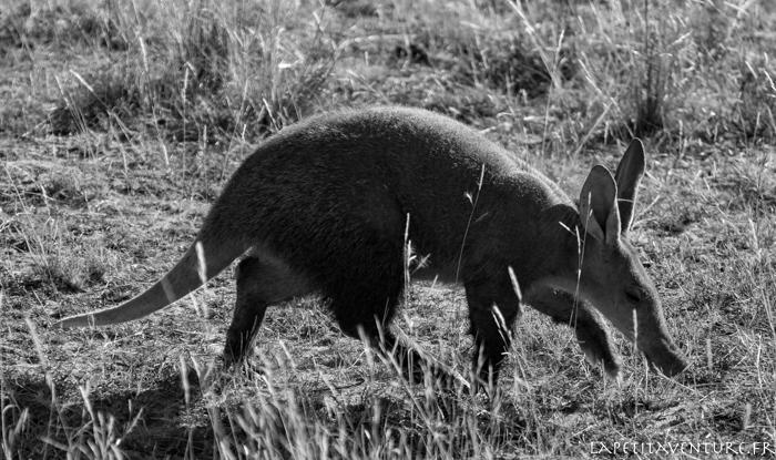 afrique-safari-animaux-blog-la-petite-aventure-6