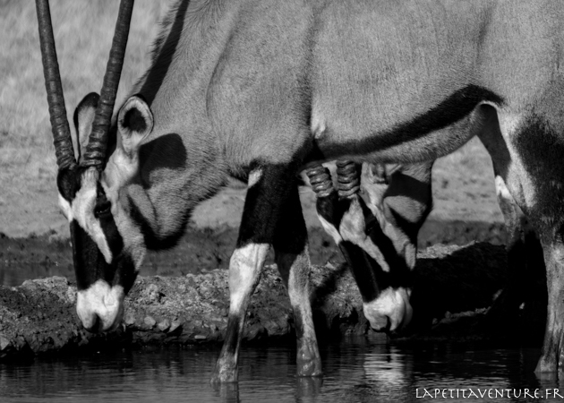 afrique-safari-animaux-blog-la-petite-aventure-7