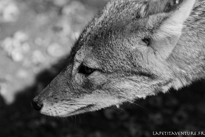 afrique-safari-animaux-blog-la-petite-aventure-8
