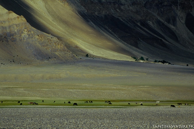 zanskar-voyage-blog-la-petite-aventure-7